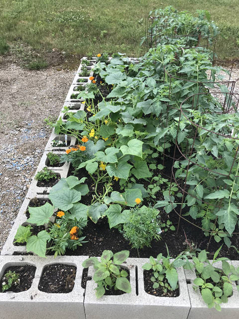 A thriving garden is pictured at the Bish Discovery that will yield many seeds to be used the following season.