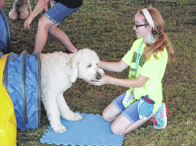 Teddy was among several other dogs on Monday that demonstrated several abilities such as jumping over a bar and going through a tunnel to the sound of their owner calling them at the Darke County Fair.