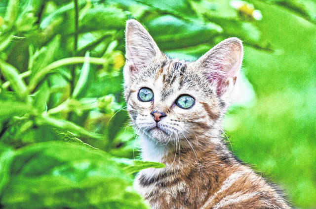 The Village of Arcanum is asking residents to do their part in helping reduce the feral cat population.