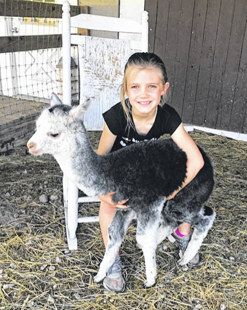 Elayna Ernst, daughter of Doug and Amanda Ernst, of Troy, holds one of the alpaca cria (baby) at Count Your Blessings Alpacas farm. She is the granddaughter of the owners, Rick and Annette Paulus.