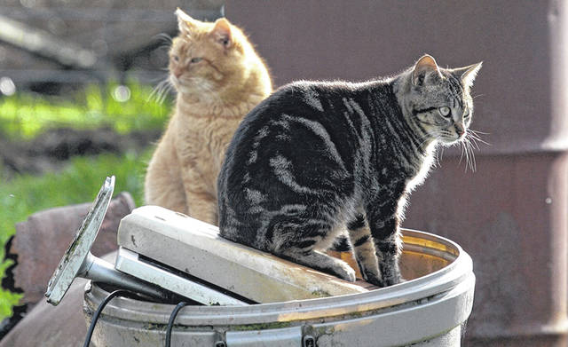 Colonies of stray cats can cause a number of problems for the community, including noise, destruction of property and, most insidiously, conflict between neighbors.