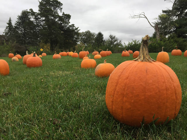 The Great Pumpkin Hunt will take place at 1 p.m. Oct. 20 at Shawnee Prairie Preserve.