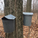 Local maple syrup available at the Prairie