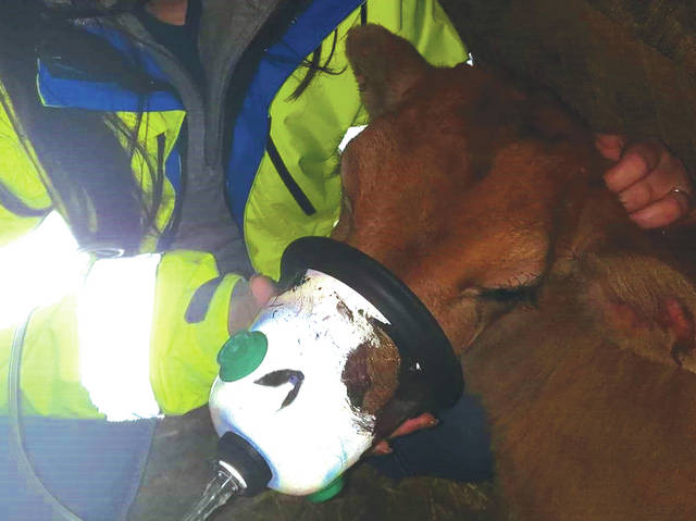 The Schaurer Foundation gift helped purchase oxygen masks like the one pictured, which helped resuscitate a calf following a barn fire in Liberty Township.