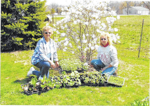 Wildflower Garden Club's Judy Burns, treasurer, and Barb Rhoades, president are preparing for Saturday's plant sale.