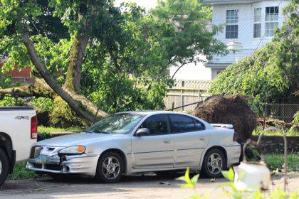 This tree in New Madison was uprooted by a Memorial Day tornado and partially landed on a home on Jefferson Street.
