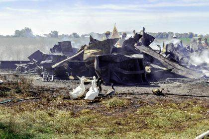 The home, barn and livestock were lost in a three-alarm fire. Some of the foul that survived are surveying the damage.