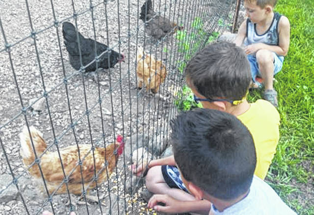 The chickens came running when they saw young campers with handfuls of corn during Farm Fun week at this week's DeColores Montessori camp.