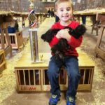 Taking chickens to show