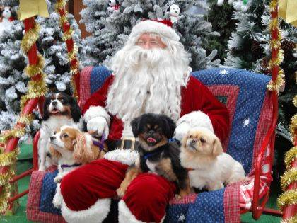 Darke County Friends of the Shelter will be offering pictures with Santa Claus on Nov. 16.