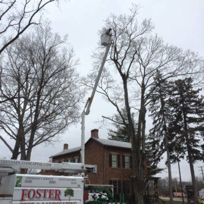 Dangerous trees were removed in front of Garst Museum.