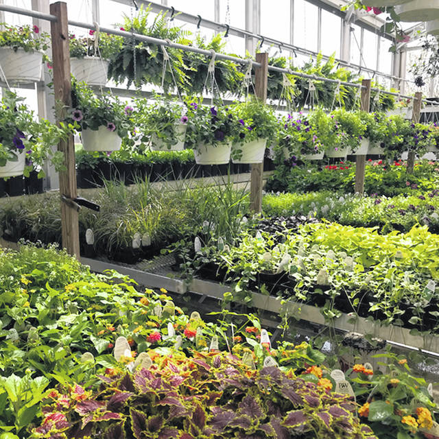 Provided photo The Versailles Agricultural Education Department and FFA Chapter will be conducting online google sales only for the plants within the greenhouse.