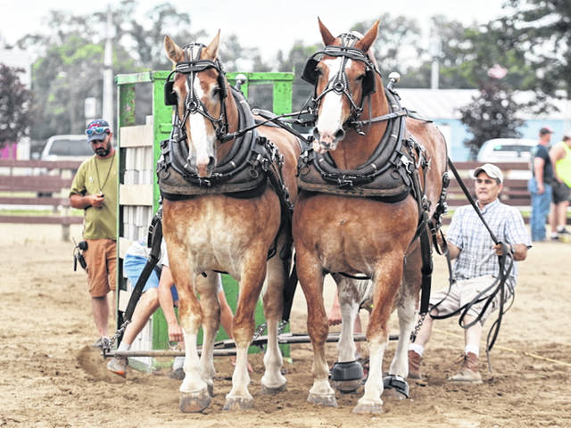 A team of draft horses takes a turn at the Greenville Power of the Past 2020 horse pull.