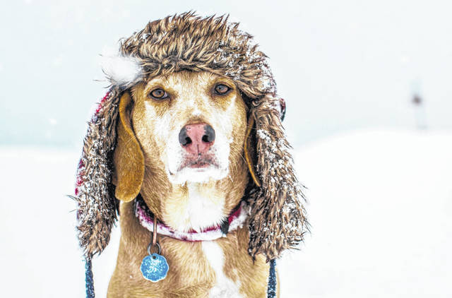 As temperatures drop and heavy snow and ice threaten the Midwest and Northeast, pet owners need to take measures to keep their pets safe.