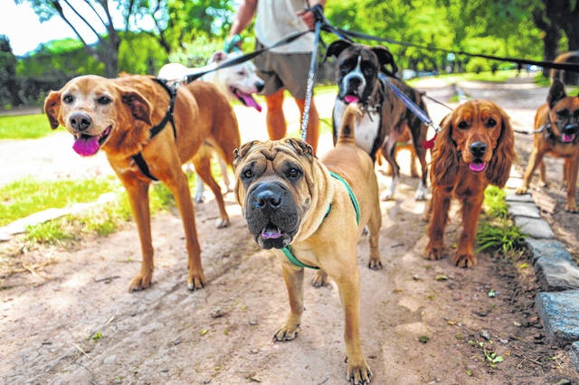 Darke County annual dog licenses ($16) are now available at the Darke County Animal Shelter, the Darke County Auditor's Office, and eight area locations.