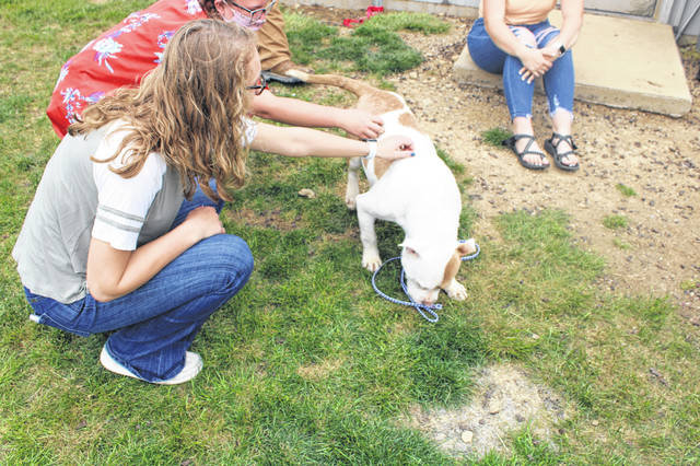 Pictured are Darke County high school students at The Darke Animal Shelter playing with Rocky the pitbull. Students from across the county toured various county facilities to learn more about government.