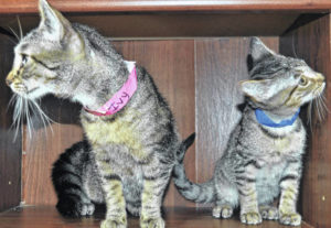 Feline Friday Adoptable 'Cool Cats'