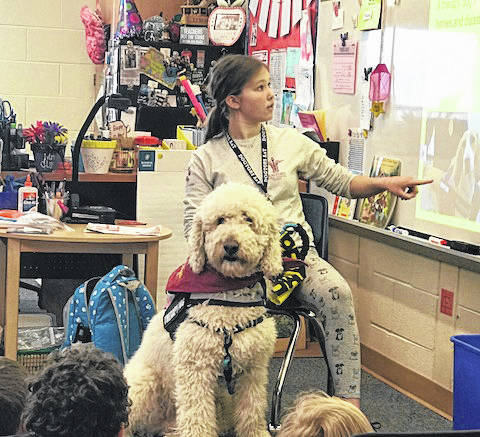 Valley Forge students enjoyed reading and spending time with some special visitors. Mary Tarkany, a Brookville student and daughter of sixth grade Valley Forge teacher Melissa Tarkany, is a therapy dog handler. Mary and her therapy dog, Teddy, traveled around to various classrooms discussing what a therapy dog does and the requirements needed to become a handler. Mary's goal was to bring joy to the students while also inspiring others to become a therapy dog handler. The Valley Forge family truly enjoyed having them for the day.