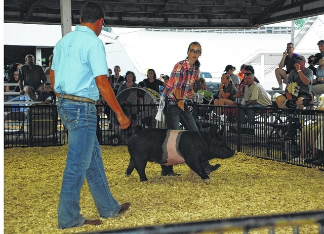 Summer Doty, right, looks at the judge while showing her Champion FFA Market Gilt on Monday in the ring against the Grand Champion 4-H Market Gilt for the right to be crowned the 2015 Champaign County Fair Grand Champion Overall Market Gilt.