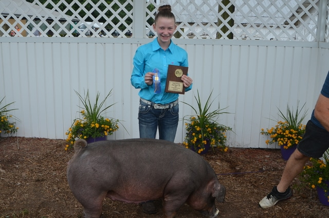 Morgan Heizer, Duroc Purebred Gilt class winner