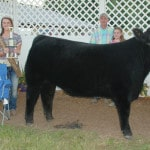 Reserve champion steer winner