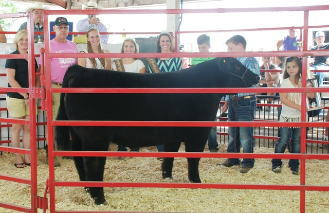 Avery McGuire's 4-H Market Steer (Jr. Showman and Div. 1 Winner) sold for $1,225 to a syndicate of buyers.