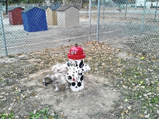 Dogs and their people are finding new decor at Fido's Field, the dog park within Urbana's Melvin Miller Park. Donated by the Urbana Fire Division after an upgrade of local fire hydrants, old hydrants were given a Dalmatian look by Steve McInturff. On the helmets are the letters UFD, for Urbana Fire Division, and CCCI, for Champaign County Citizens for Canines Inc., the group that created Fido's Field. This photo indicates dogs may take to the decorated hydrants.