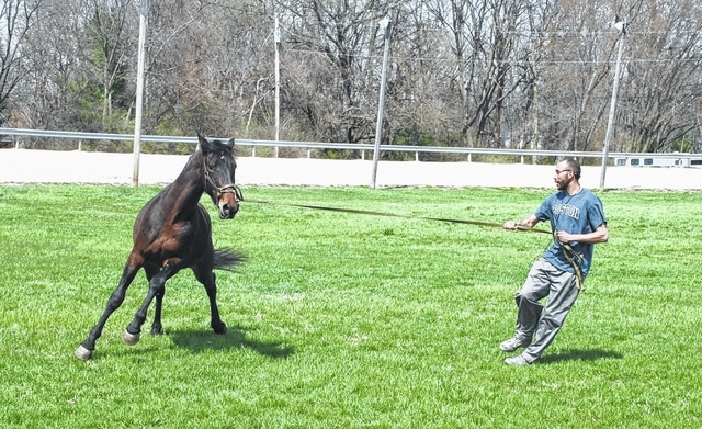 Trainer Michael Smith exercises racing horse Camcoderson on the grassy infield of the track at the Champaign County Fairgrounds on Wednesday afternoon as temperatures climbed into the mid-60s. Harness racing horses and all their accessories housed at the fairgrounds are coming out of winter boarding in preparation for racing season.