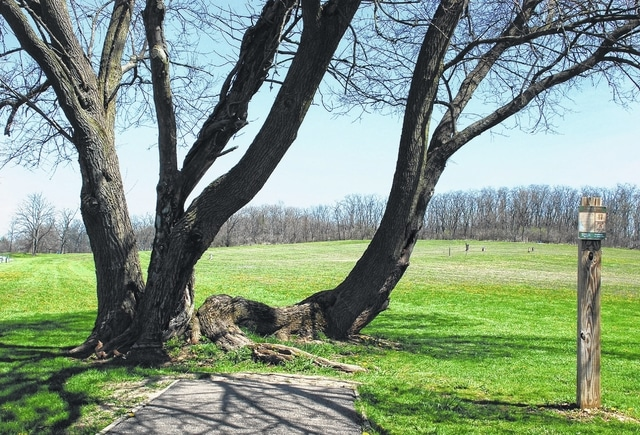 """Urbana's Hilltop Disc Golf Course at Melvin Miller Park will host the inaugural Mando Madness tournament on Saturday. Pictured is the par-5 17th hole in which players must throw a disc through a """"U"""" shaped tree to reach the basket located 540 feet away."""