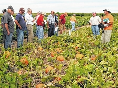The Pumpkin Field Day event is 6 to 8 p.m. Aug. 18 at the Western Agricultural Research Station, 7721 S. Charleston Pike, in South Charleston.