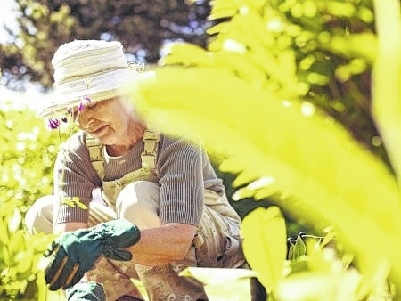 Gardening may make one more physically active and has been shown to improve physical functioning in older adults.