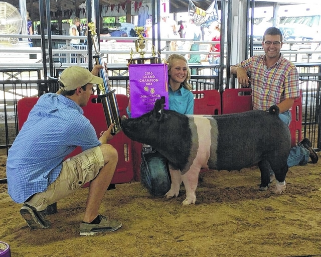 Graham High School Senior Annie Springer holds up the Grand Champion Overall Market Gilt trophy following Monday's Market Gilt Show at the Champaign County Fair in Urbana. Pictured, left to right, are Christopher Nott, Springer, and show judge Miles Toenyes.