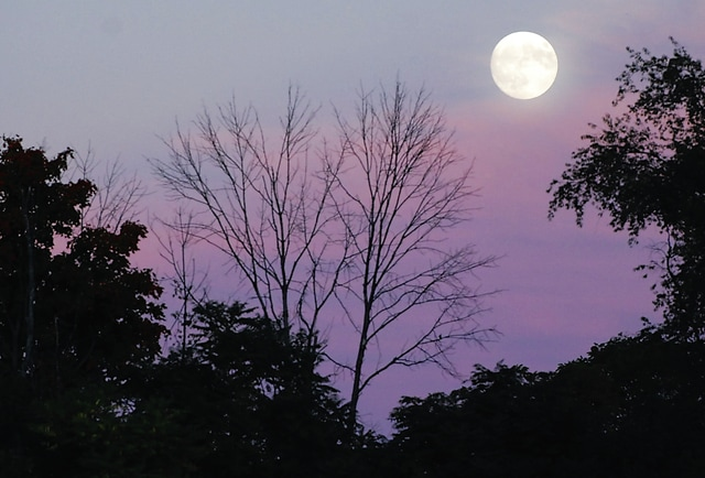 A full moon rises over the football field at Mechanicsburg on Friday. As October moves along, tree foliage is changing colors, but ash trees like the ones pictured left of the moon are mere shadows of their former selves. The weekend featured what is known as a super Hunter's Moon. A super moon occurs when the moon's orbit bring it to its closest point toward Earth, causing it to appear larger. A Hunter's Moon is the first full moon after the Harvest Moon, which occurs closest to autumnal equinox. Hunter's Moons rise earlier near sunset, allowing more overall daylight for traditional hunters. Both types of moons, Harvest and Hunter's, are also known as blood moons due to their reddish appearance on the horizon.