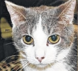 Aretha is one of four female cats crated and dropped off in front of PAWS Animal Shelter. One of the cats has been adopted. Aretha and crate-mates Stevie and Patsy await good people with room in their hearts and homes to walk through the door.