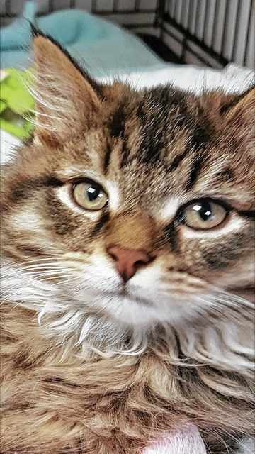 PAWS Animal Shelter reports that Chewbacca is as sweet as he is cute. At 10 weeks old, he's ready to snuggle into a family of his own.