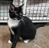 Pearl is quiet and loves to cuddle, but also loves to explore. Check her out at PAWS Animal Shelter.