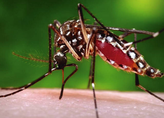 Ohio has a type of mosquito that can transmit West Nile virus, and 17 cases were reported in the state last year.