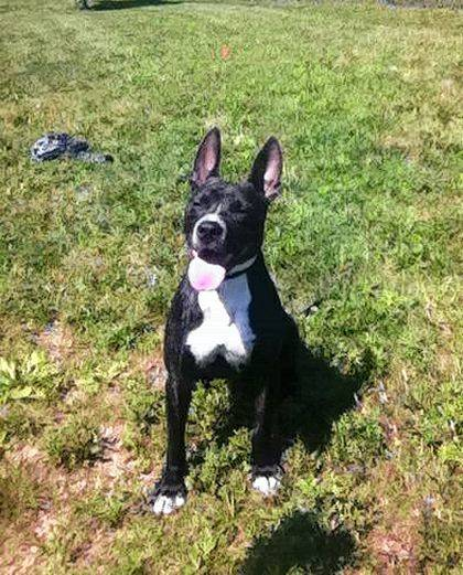 Sonar is a happy fellow who loves people. Stop by PAWS Animal Shelter and watch his tail wag and wag.