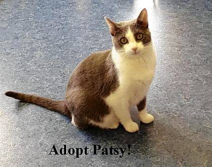 Looking for a sweet quiet girl who gets along with other cats? Then, Patsy may be just the pet for you. You can meet her at PAWS Animal Shelter.