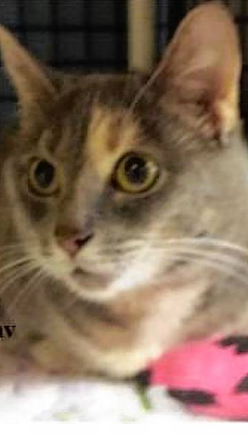 Sweet and shy, Faith is waiting for a loving person or family to adopt her from PAWS Animal Shelter.