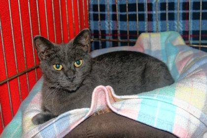 Although named Granite, this one-year-old is a sweet girl who has lived at PAWS Animal Shelter five months and is quite ready for a family of her own.