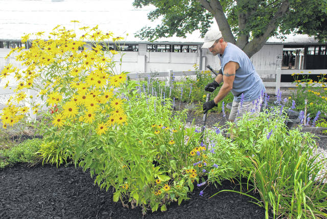 Steve Flora of Flora Landscaping works to shape up Bradley Park at the Champaign County Fairgrounds. Bradley Park is planted with perennials that always bloom in time for the fair. The park is a respite area located in the middle of the livestock barns and near the main show arena. The fair opens on Friday, Aug. 3. Watch for a special preview section in the Wednesday, Aug. 1 edition of the <em>Urbana Daily Citizen</em> - including information on the fair queen candidates and a complete schedule of events.