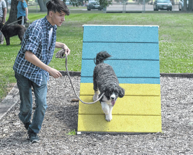 Jacob Zettel and his dog Jack show their skills during the Dog Agility Demonstration by Muttley Crew and Canine Chaos. The demonstration was part of the newly-organized community event called Summerfest at Melvin Miller Park in Urbana on Saturday.