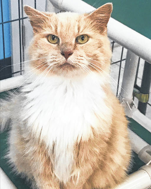 Sweet Kitty is a gentle adult cat biding her time at the Champaign County Animal Welfare League until someone drops by and decides she would be perfect to take home.