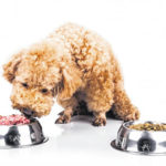 Food safety techniques important for dogs, too