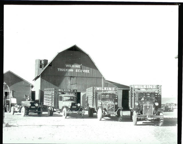This commercial photograph of the Wilkins Trucking Service shows a fleet of trucks ready to work.