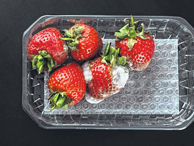 Food spoilage can occur more quickly in perishable foods depending on the impact of temperature, heat, humidity, light exposure, oxygen and the growth of microorganisms.