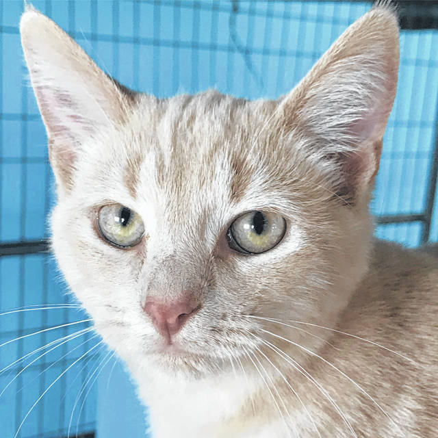 Cartwright has been at the Champaign County Animal Welfare League since he was 10 weeks old. He's now 5 months old and eager for a home of his own.