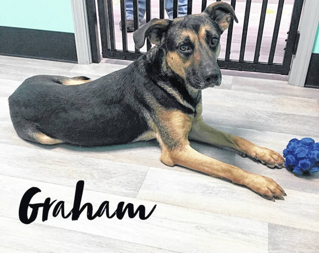 Graham is a friendly 2-year-old German Shepherd ready for adoption. Check him out at the Champaign County Animal Welfare League.
