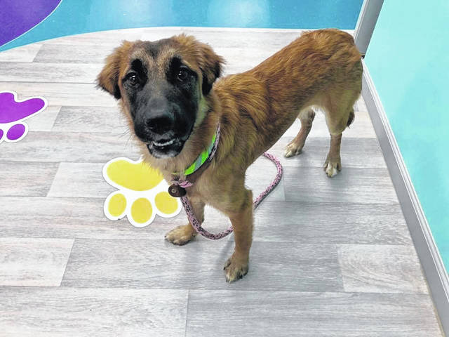 Visit the Champaign County Animal Welfare League to see whether Kia, this 8-month-old female, may be a good match for you and your family.